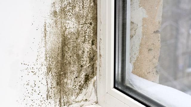 Die Wand hinter einem Fenster ist stark verschimmelt.