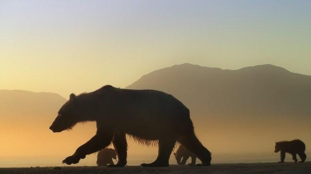 Drei Bären in der Dämmerung.