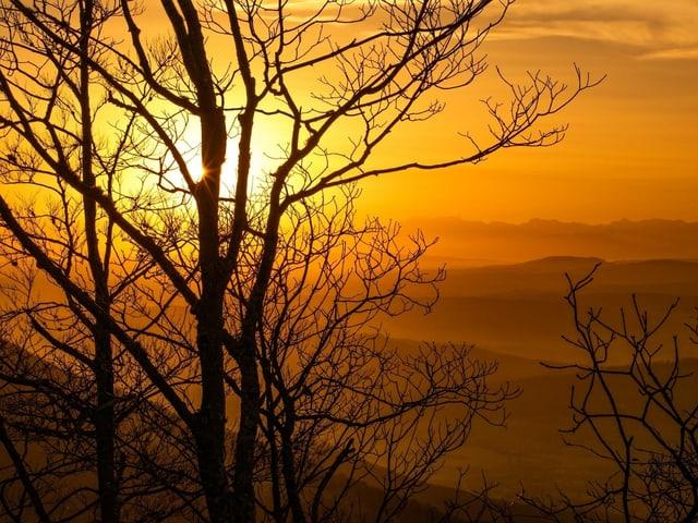 Bild ganz in gelb mit Konturen von kahlem Baum im Vordergrund.