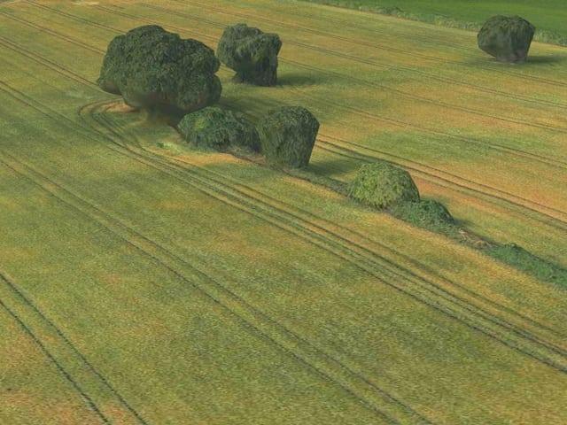 3D-Kartenansicht: Ein Getreidefeld mit unförmigen Bäumen