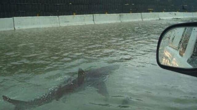 Ein Haifisch schwimmt. Rechts im Bild ist ein Autospiegel.