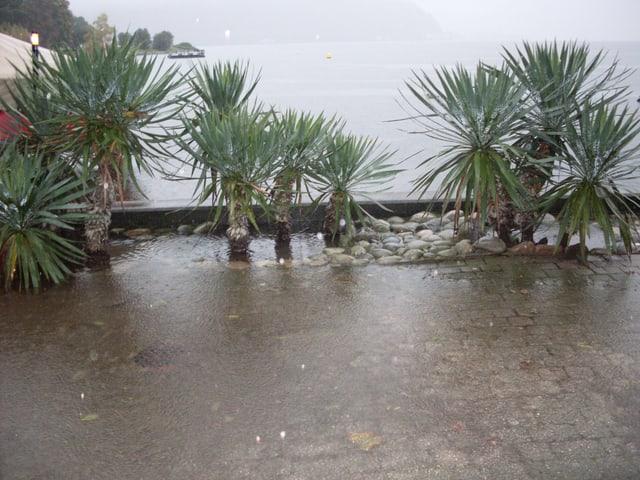Der Luganersee tritt über das Ufer, Palmen stehen im Wasser.