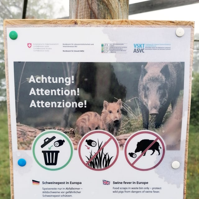 Plakat, das vor Schweinepest warnt