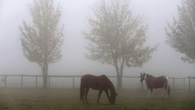 Zwei Pferde im Nebel auf einer Weide.