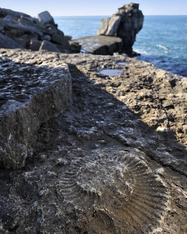 Ein Ammonit-Fossil in einem Felsen am Meer.