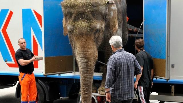 Ein Elefant wird aus einem Transporter geladen. (Bild von 2010)