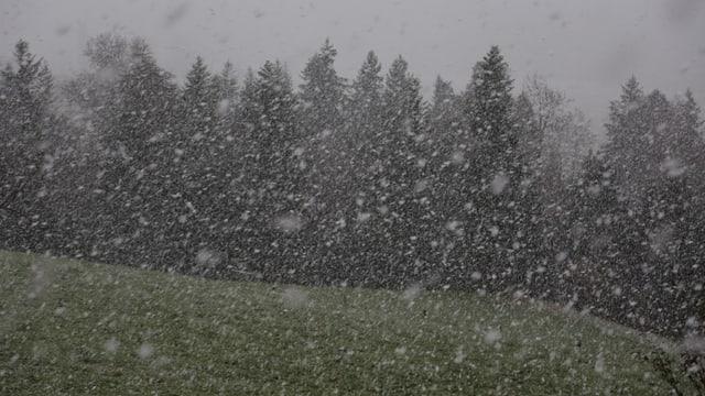 Schneeflocken fast wie Leintücher waren am 11. November bei Oberhünigen zu beobachten.