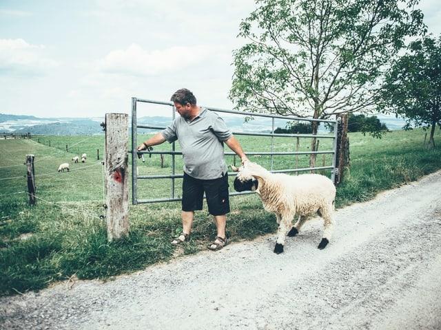 Bauer zieht Schaf auf Weide.