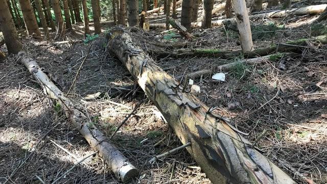 Umgekippte Bäume im Wald