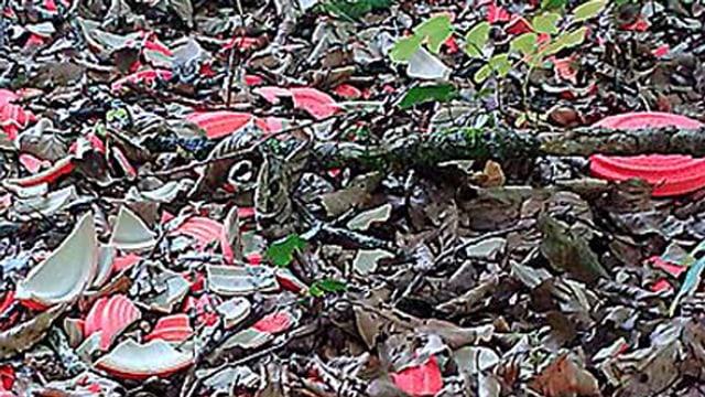 Waldboden übersät mit Scherben von Tontauben