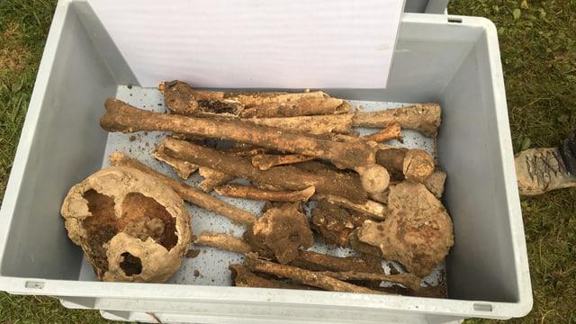 Knochen in einer Kiste.
