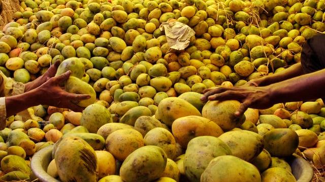 Ein Berg aus gelben Mangos.