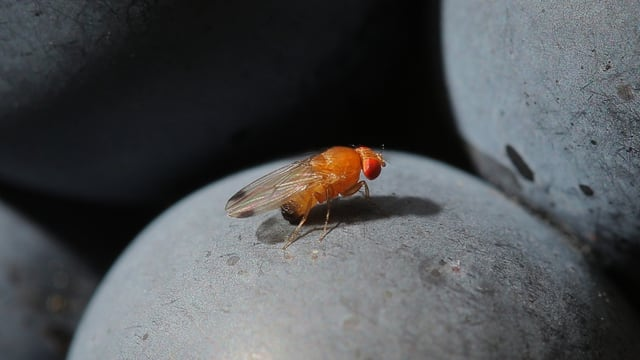 Eine kleine rote Fliege.