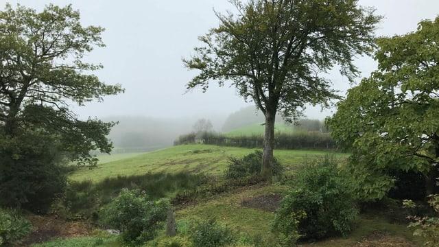 Nebelverhangene walisische Hügellandschaft.