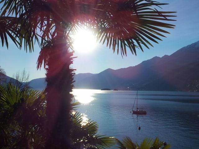 Palme im Vordergrund mit Sonne zwischen den Blättern, dahinter See.