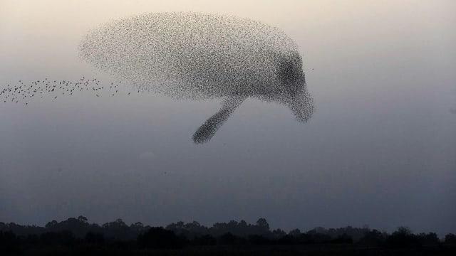 Ein Zugvogel-Schwarm im Himmel.