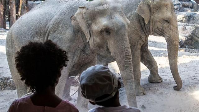 Zwei Kinder beobachten zwei Elefanten.