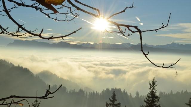 Blick durch die Äste eines Baumes auf das Nebelmeer.