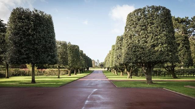 Bäume im oldatenfriedhofs in Colleville-sur-Mer in der Normandie.