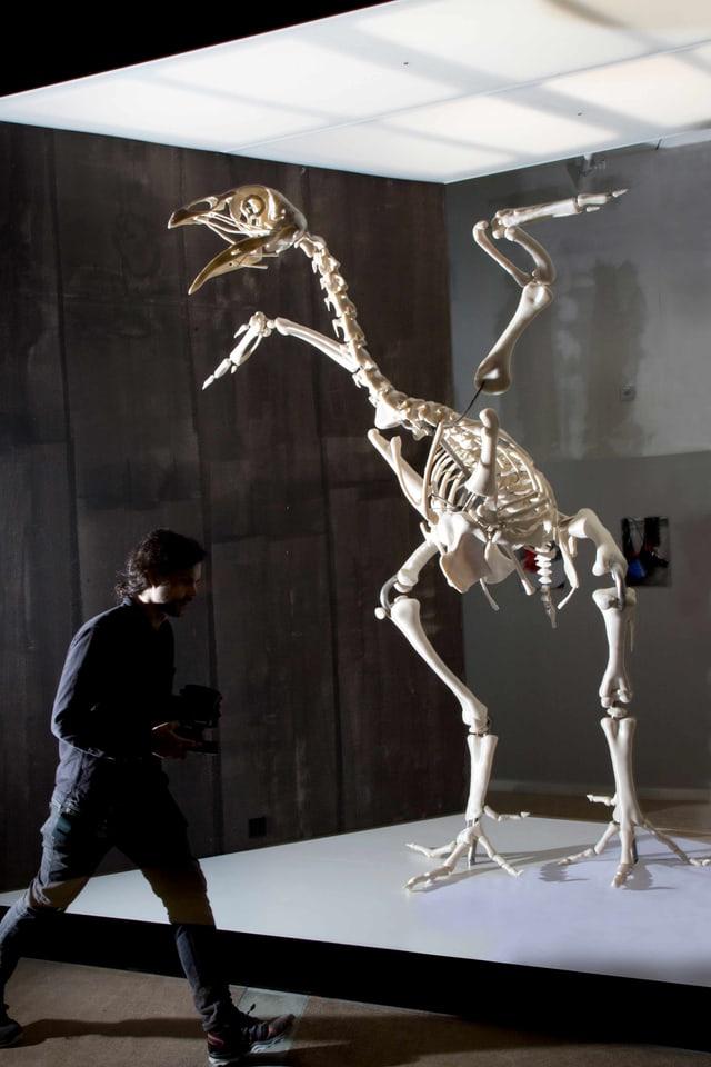 Ein Skelett eines Tieres in einer Ausstellungsfläche.