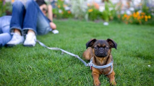 Ein Hund ist auf einer Wiese angeleint, während sein Halter mit seiner Freundin im Gras liegt.