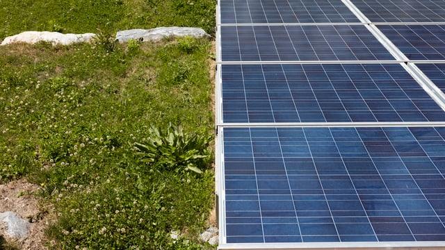Solarpanel auf einer grünen Wiese.