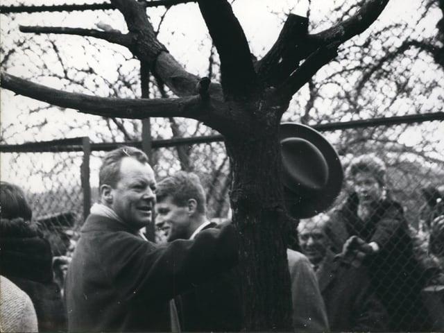 1962: Willy Brandt am Tag, als der nach ihm benannte Weisskopfseeadler im Berliner Zoo einzog.