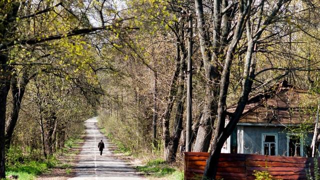 Eine von Bäumen gesäumte Strasse, am Rand ein altes Haus, auf der Strasse geht eine Person.