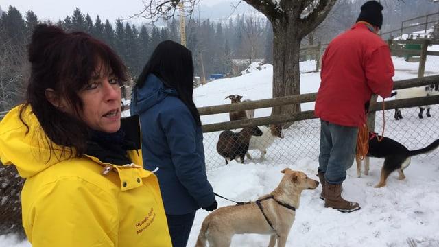 Ziegen und Hunde im Walter Zoo.
