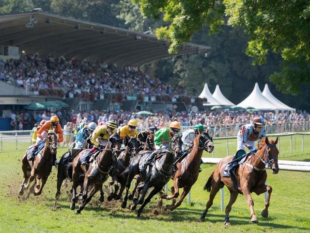 Mehrere Pferde rennen auf einer Rennbahn.