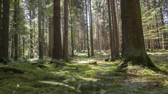 Waldgebiet.