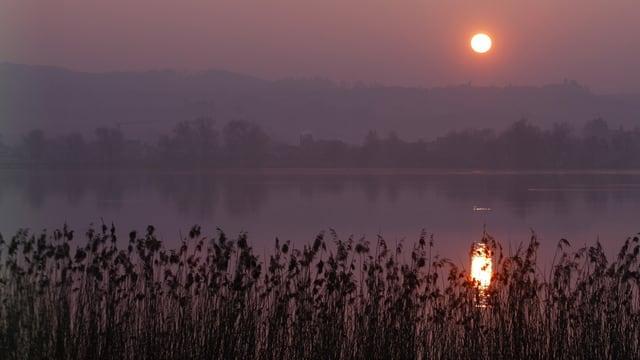 Sonnenuntergang, See, Schilf.