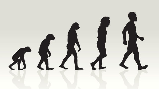 Darstellung der Evolution in fünf Schritten, im Profil ist links ein Primate, gebückt, rechts ein aufrecht gehender Mensch.