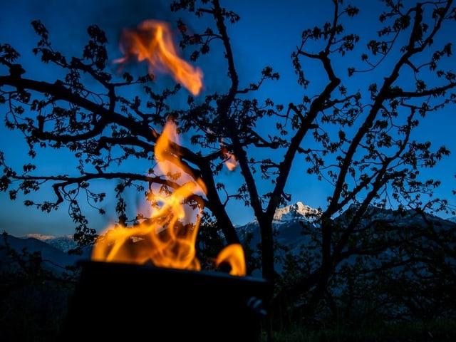 Brennende Antifrostkerze vor Obstbaum