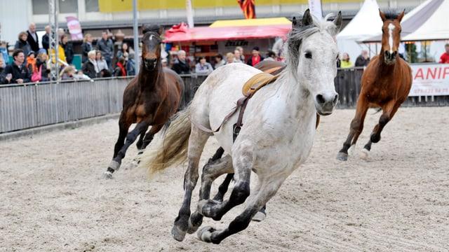 Pferde an der Offa