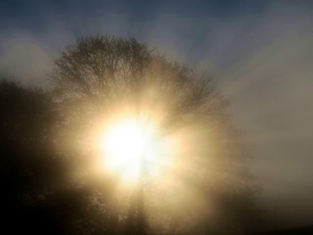 Sonne strahlt durch nebligen Baum.