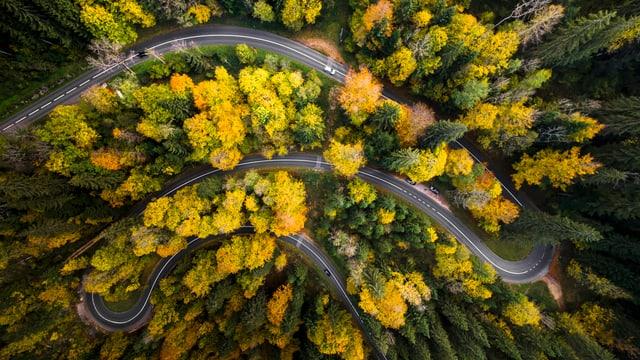 Ein Wald aus der Vogelperspektive, durch den sich eine Strasse schlängelt.