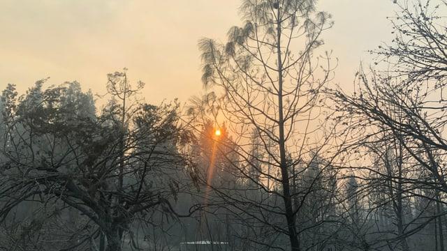 Die Sonne scheint, aber der Rauch trübt die Sicht