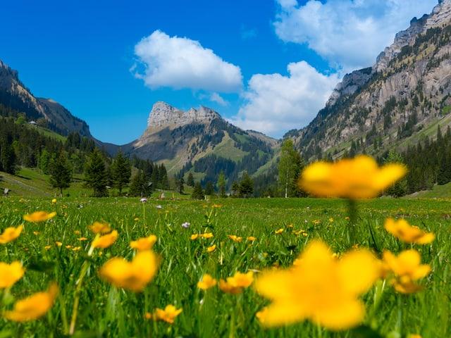 Blumen im Vordergrund, Berge im Hintergrund.