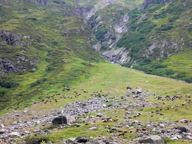 Steiniges Gelände auf einer Alp.