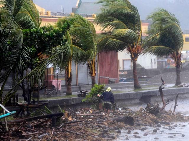 Palmen im Sturm in der Stadt Atimonan