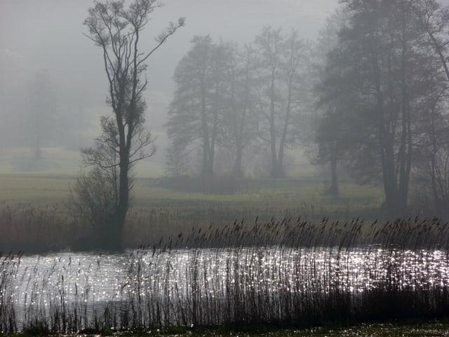 Bild in Grautönen. Ein Weiher mit Schilf, Wiesen und Bäume im Hintergrund. Durch den Nebel wird ist alles grau und mystisch zu sehen.