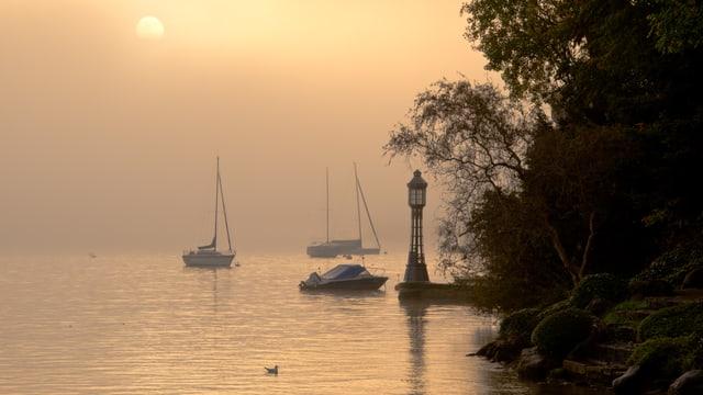 Idyllische Nebelschwaden über dem Zürichsee. Die Szenerie ist in zartes Rosa gehüllt.