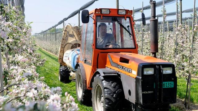 Ein Obstbauer sitzt auf Traktor und spritzt Streptomycin.
