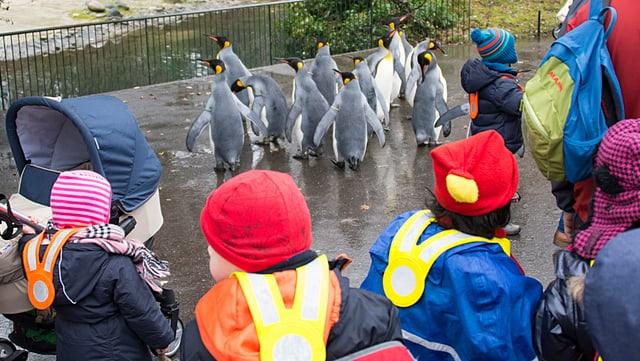 Schulkinder und Pinguine