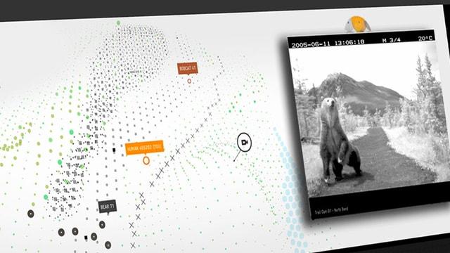Die Oberfläche der Webdoku «Bear 71».