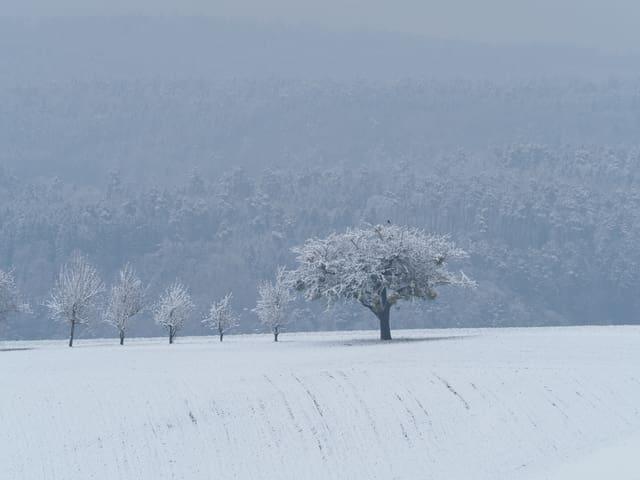 Bäume auf einer verschneiten Wiese.