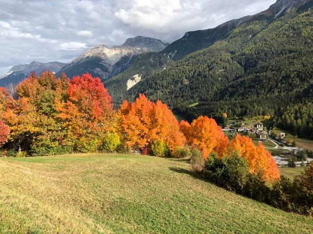 Rot und braungelb verfärbte Laubbäume auf einem Hügel.
