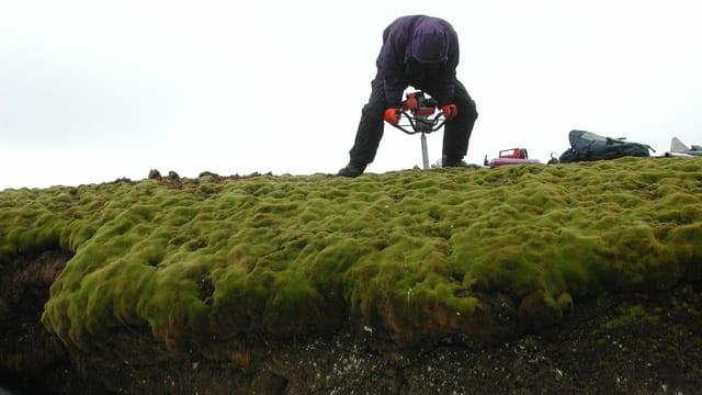 Ein Forscher bei der Arbeit auf Signy Island. Er entnimmt mit einem Bodenproben.