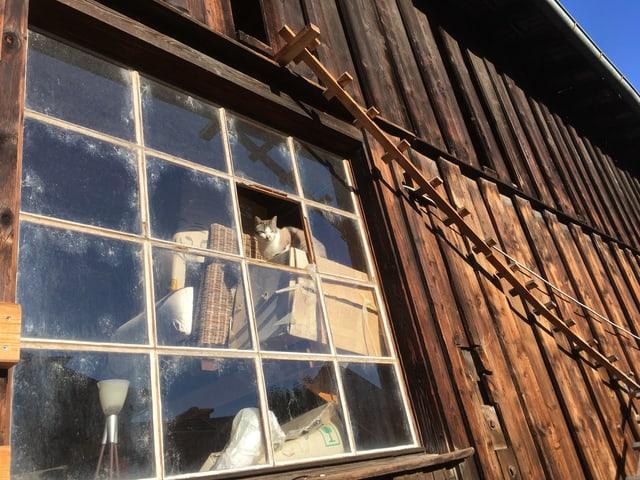 Alter Schopf von aussen, durchs Fenster sieht man Brockenstubenmöbel, auf denen eine Katze sitzt.
